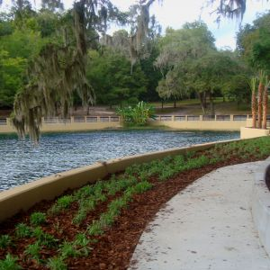 Salt Springs Recreation Area